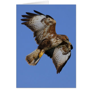 Buzzard  2 card