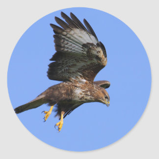 Buzzard  3 classic round sticker