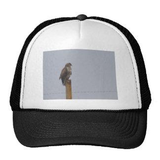 Buzzard Cap
