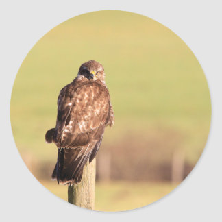 Buzzard Classic Round Sticker
