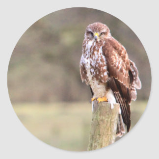 Buzzard Round Sticker