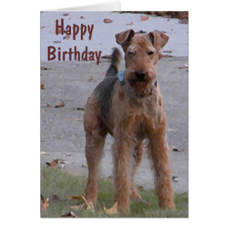 BV- Cute Airedale Birthday Card