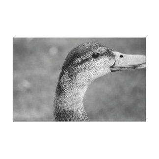 BW Duck Gallery Wrapped Canvas