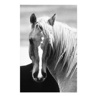BW Horse Portrait Custom Stationery