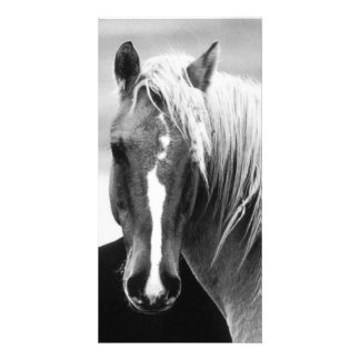 BW Horse Portrait Photo Greeting Card