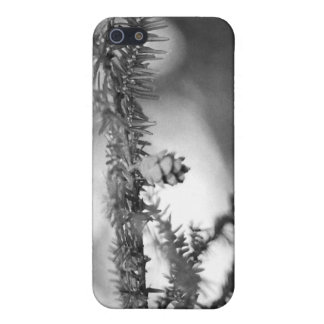 BW Pinecone iPhone 4 Speck Case Case For iPhone 5/5S