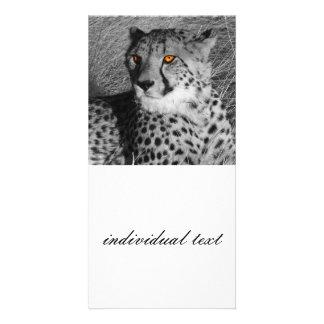 BW splash Cheetah Photo Card