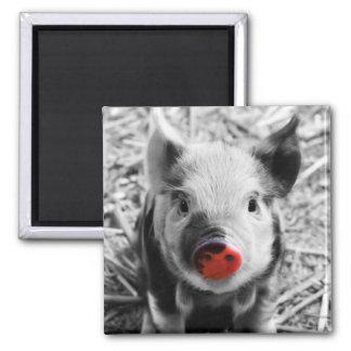 BW splash sweet piglet Square Magnet