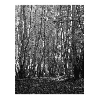 BW Trees 21.5 Cm X 28 Cm Flyer