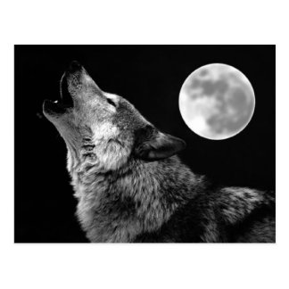 BW Wolf Howling at Moon Post Cards