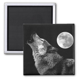 BW Wolf Howling at Moon Square Magnet