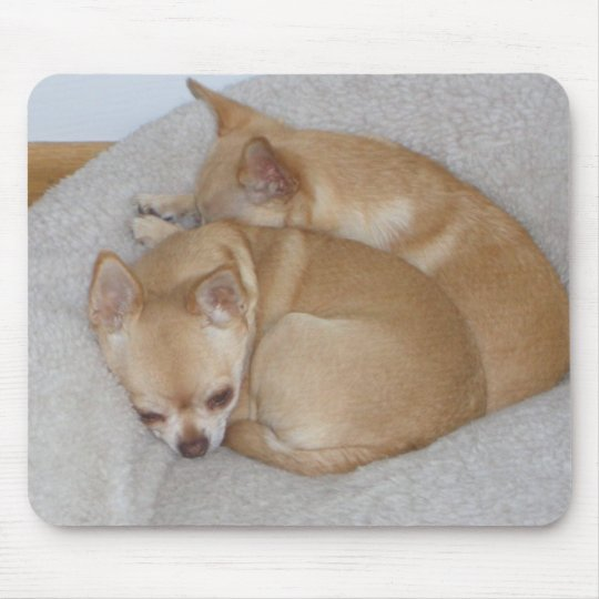 BY- Cute Chihuahua Puppy Dogs Mousepad