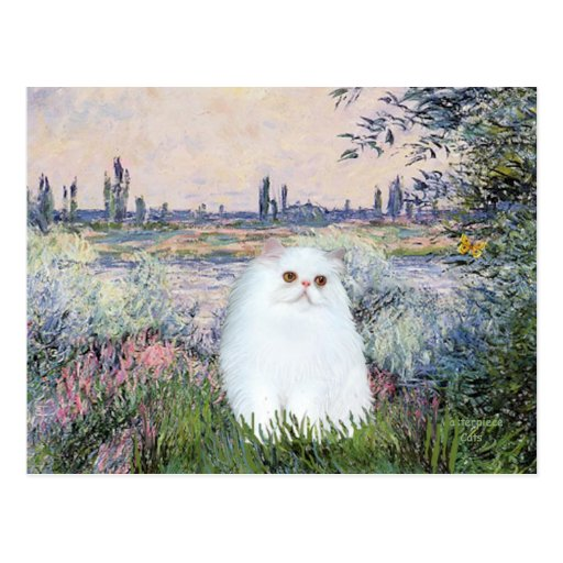 By the Seine - White Persian kitten #49 Post Card