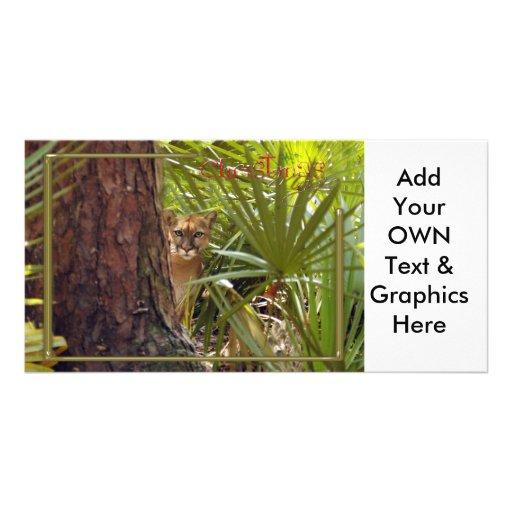 c-2011-cougar-046 photo greeting card