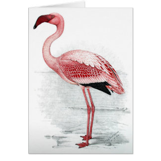 C G Finch-Davies Flamingo Card