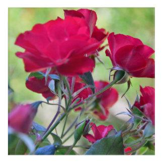 CA Botanical Roses Acrylic Print