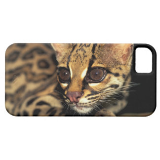 CA, Central Panama, Soberania NP, Margay 2 Case For The iPhone 5