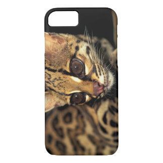 CA, Central Panama, Soberania NP, Margay 2 iPhone 8/7 Case
