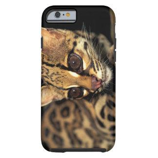 CA, Central Panama, Soberania NP, Margay 2 Tough iPhone 6 Case