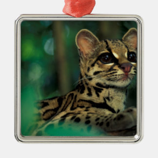 CA, Central Panama, Soberania NP, Margay Christmas Ornament