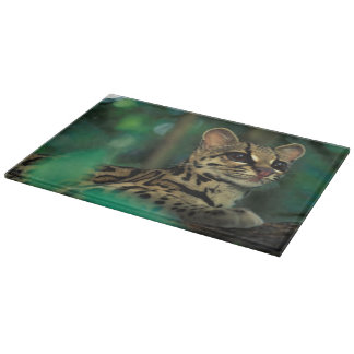 CA, Central Panama, Soberania NP, Margay Cutting Board