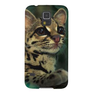 CA, Central Panama, Soberania NP, Margay Galaxy S5 Cases