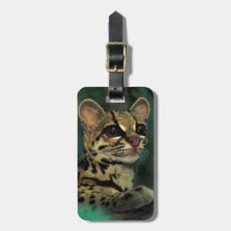 CA, Central Panama, Soberania NP, Margay Luggage Tag