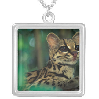 CA, Central Panama, Soberania NP, Margay Silver Plated Necklace