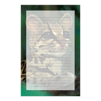 CA, Central Panama, Soberania NP, Margay Stationery