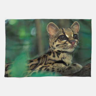 CA, Central Panama, Soberania NP, Margay Tea Towel