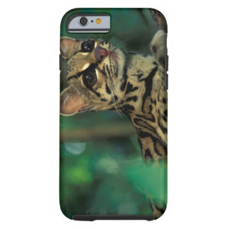 CA, Central Panama, Soberania NP, Margay Tough iPhone 6 Case