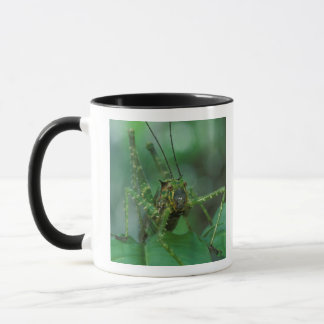 CA, Costa Rica, La Selva Biological Station, Mug