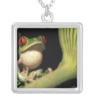 CA, Costa Rica, Red-eyed tree frog (Agalychnis Silver Plated Necklace