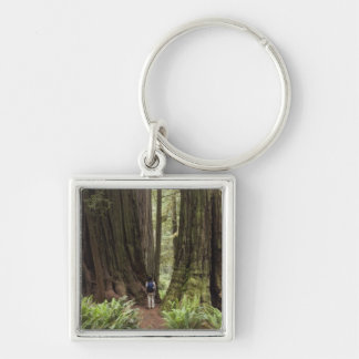 CA, Jedediah Smith Redwoods State Park, Key Ring