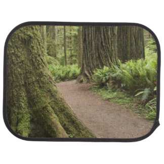 CA, Jedediah Smith State Park, Simpson-Reed Car Mat