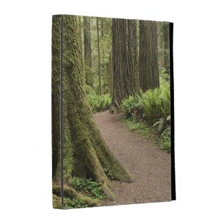 CA, Jedediah Smith State Park, Simpson-Reed iPad Folio Covers