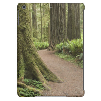 CA, Jedediah Smith State Park, Simpson-Reed iPad Air Cover