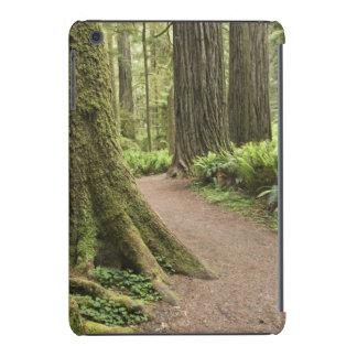 CA, Jedediah Smith State Park, Simpson-Reed iPad Mini Case
