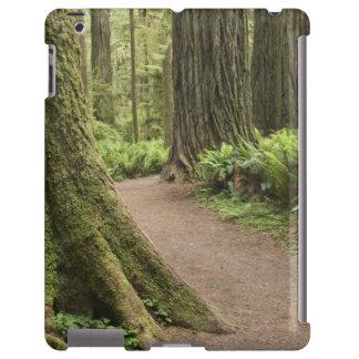 CA, Jedediah Smith State Park, Simpson-Reed iPad Case