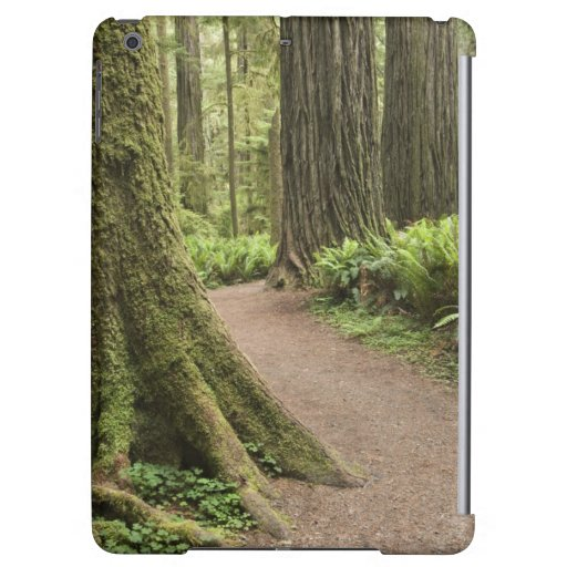 CA, Jedediah Smith State Park, Simpson-Reed Case For iPad Air
