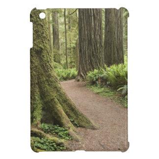 CA, Jedediah Smith State Park, Simpson-Reed iPad Mini Cases