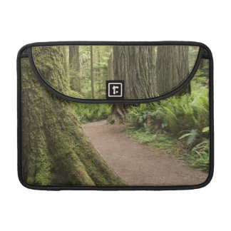 CA, Jedediah Smith State Park, Simpson-Reed Sleeve For MacBook Pro