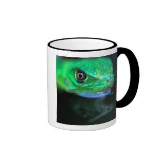 CA, Panama, Barro Colorado Island, baby Green Mugs