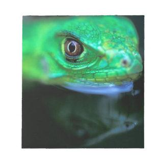 CA, Panama, Barro Colorado Island, baby Green Notepad