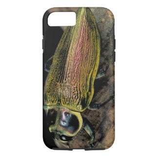 CA, Panama, Barro Colorado Island, Buprestid iPhone 8/7 Case
