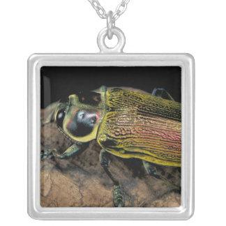 CA, Panama, Barro Colorado Island, Buprestid Silver Plated Necklace