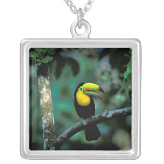 CA, Panama, Soberania NP, Keel-billed Tucan in Silver Plated Necklace
