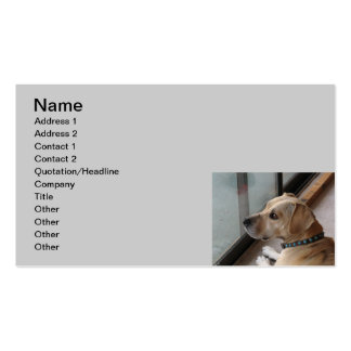 CA- Pet Sitting Business Cards