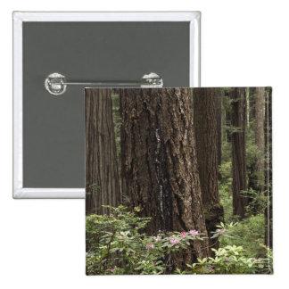 CA, Prairie Creek State Park, Coast 15 Cm Square Badge