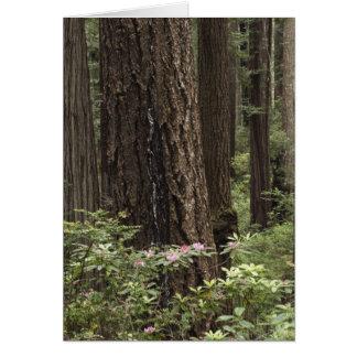CA, Prairie Creek State Park, Coast Greeting Card